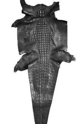 bô da cá sấu